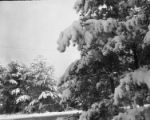 Burlington: Snow scene