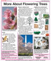 More About Flowering Trees