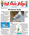 All About Gulls