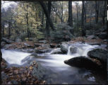 """Wilson Creek, Pisgah National Forest at Blue Ridge Parkway"""