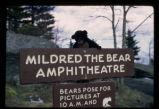 "Bear cub on ""Mildred the Bear Amphitheatre"" sign"