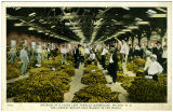 Interior of a Loose Leaf Tobacco Warehouse, Wilson, N.C., The Largest Bright Leaf Market in the...