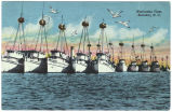 Menhaden Fleet, Beaufort, N. C.